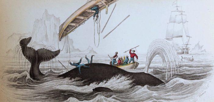 A Cape Code Moby Dick è tornata, Capitan Achab invece no
